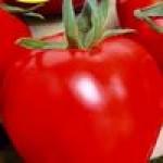 Семена детерминантных томатов