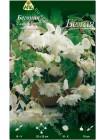 Бегония ампельная гигантская Белая (Begonia pendula giant)
