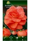 Бегония махровая Лососевая (Begonia tuberosa)