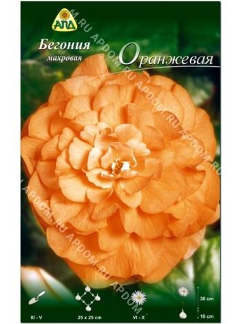 Бегония махровая Оранжевая (Begonia tuberosa)