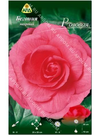 Бегония махровая Розовая (Begonia tuberosa)