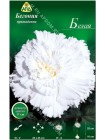 Бегония примадонна белая (Begonia Prima Donna)