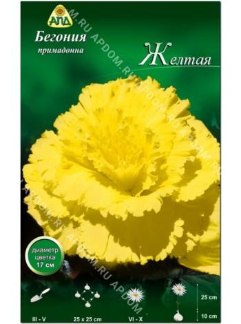 Бегония примадонна желтая (Begonia Prima Donna)