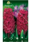 Гиацинт Вудсток (Hyacinthus Woodstock)