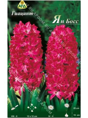 Гиацинт Ян Босс (Hyacinthus Jan Boss)