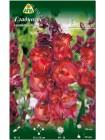 Гладиолус Бимбо (Gladiolus Bimbo)