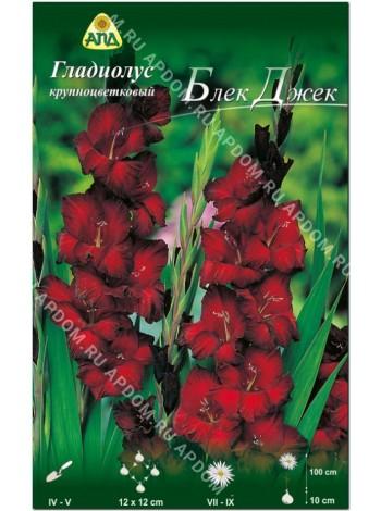 Гладиолус Блек Джек (Gladiolus Black Jack)