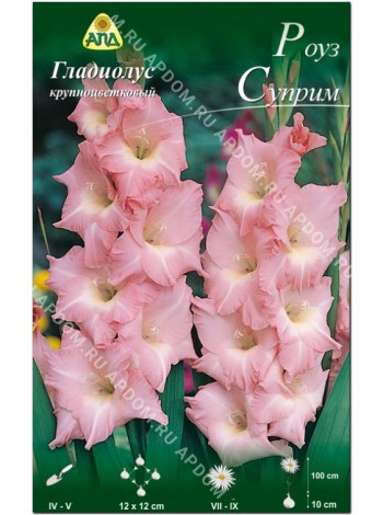 Гладиолус Роуз Суприм (Gladiolus Rose Supreme)