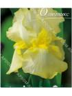 Ирис германский Саммер Олимпикc (Iris germanica Summer Olympics)