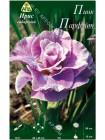 Ирис сибирский Пинк Парфэйт (Iris sibirica Pink Parfait)