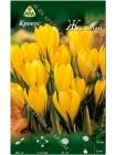 Крокус желтый (Crocus vernus Yellow)