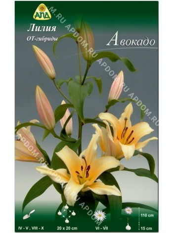 Лилия Авокадо (Lilium OT Avocado)