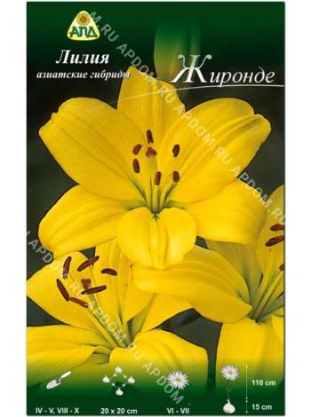 Лилия Жиронде (Lilium asiatic Gironde)