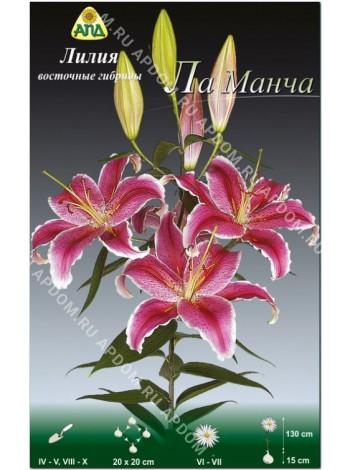 Лилия Ла Манча (Lilium oriental La Mancha)