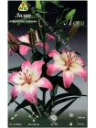 Лилия Леви (Lilium asiatic Levi)