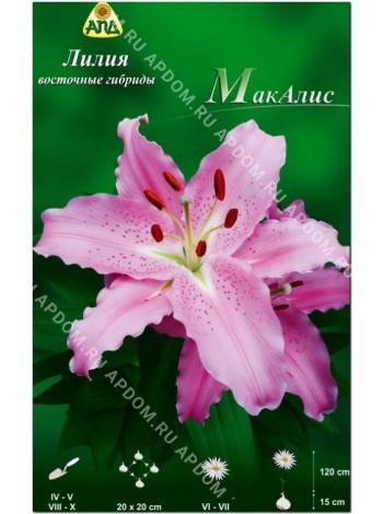 Лилия МакАлис (Lilium oriental Mcaleese)