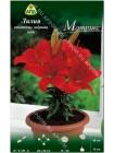 Лилия Матрикс (Lilium asiatic pot Matrix)