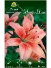 Лилия Морфо Пинк (Lilium asiatic Morpho Pink)