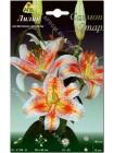 Лилия Салмон Стар (Lilium oriental Salmon Star)