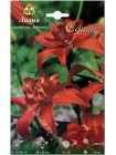 Лилия Сфинкс (Lilium asiatic Sphinx)