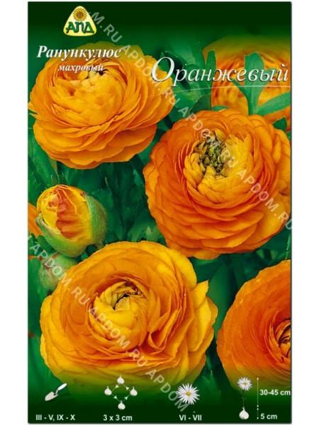 Ранункулюс махровый Оранжевый