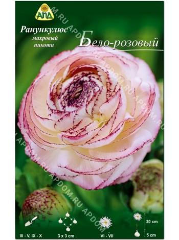 Ранункулюс махровый пикоти Бело-розовый (Ranunculus asiatic picotee)