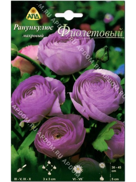 Ранункулюс махровый Фиолетовый