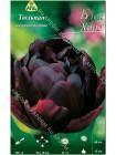 Тюльпан Блек Хиро (Tulipa Black Hero)