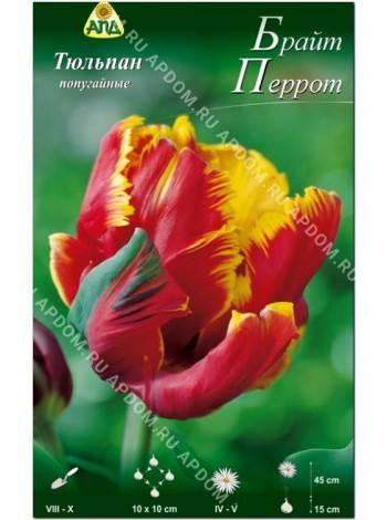 Тюльпан Брайт Перрот (Tulipa Bright Parrot)