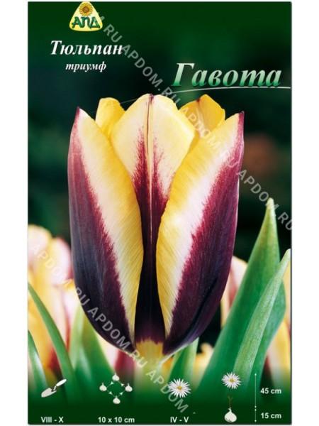 Тюльпан Гавота
