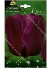 Тюльпан Греуз (Tulipa Greuz)