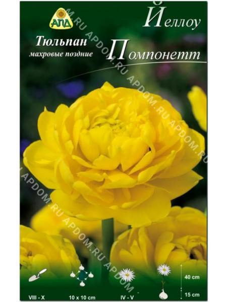 Тюльпан Йеллоу Помпонетт
