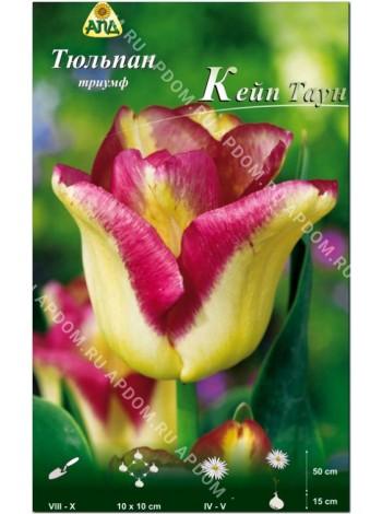 Тюльпан Кейп Таун (Tulipa Cape Town)