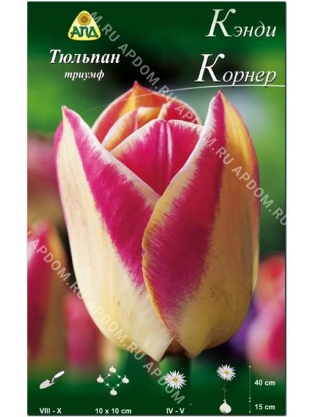 Тюльпан Кэнди Корнер