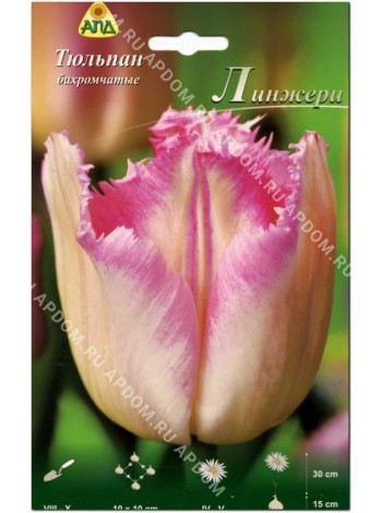 Тюльпан Линжери (Tulipa Lingerie)