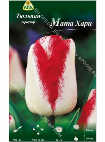 Тюльпан Мата Хари (Tulipa Mata Hari)