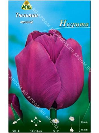 Тюльпан Негрита (Tulipa Negrita)