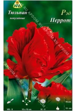 Тюльпан Ред Перрот