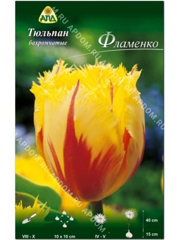 Тюльпан Фламенко (Tulipa Flamenco)