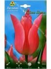 Тюльпан Чайна Пинк (Tulipa China Pink)