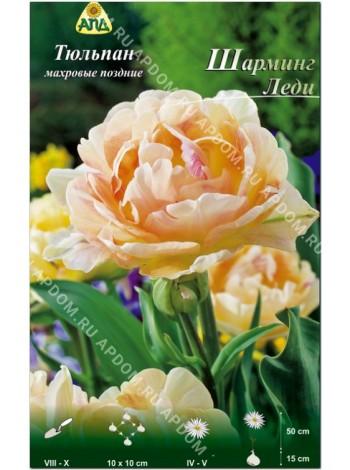 Тюльпан Шарминг Леди (Tulipa Charming Lady)