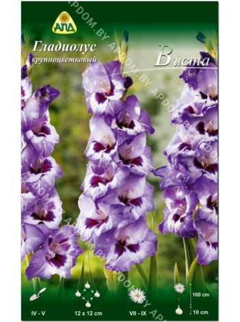 Гладиолус Виста (Gladiolus Vista)