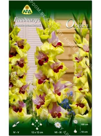 Гладиолус Оракл (Gladiolus Oracle)