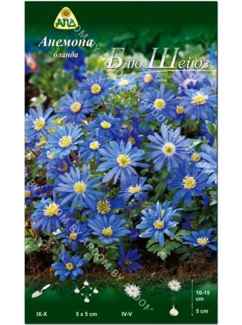 Анемона бланда Блю Шейдз (Anemone blanda Blue Shades)