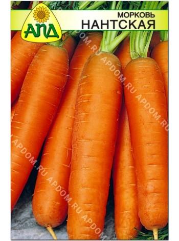 Морковь Нантская (Daucus carota L.)