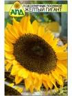 Подсолнечник посевной Желтый Гигант (Helianthus annuus)