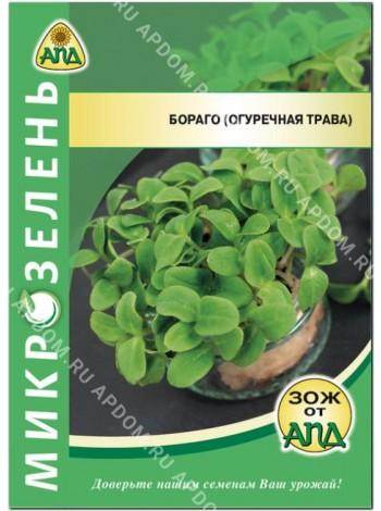 Микрозелень Бораго (огуречная трава)