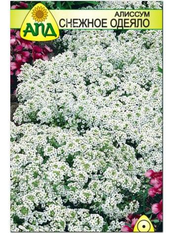Алиссум Снежное Одеяло (Lobularia maritima)