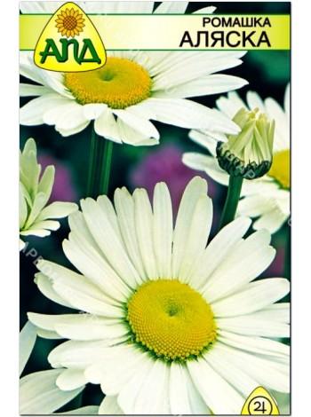 Ромашка Аляска (Leucanthemum maximum)
