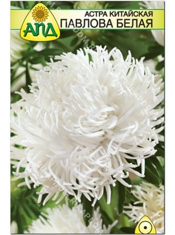 Астра Павлова белая (Callistephus chinensis)